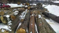 Logs Ready to Haul